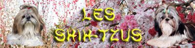 Shih-tzu.fr